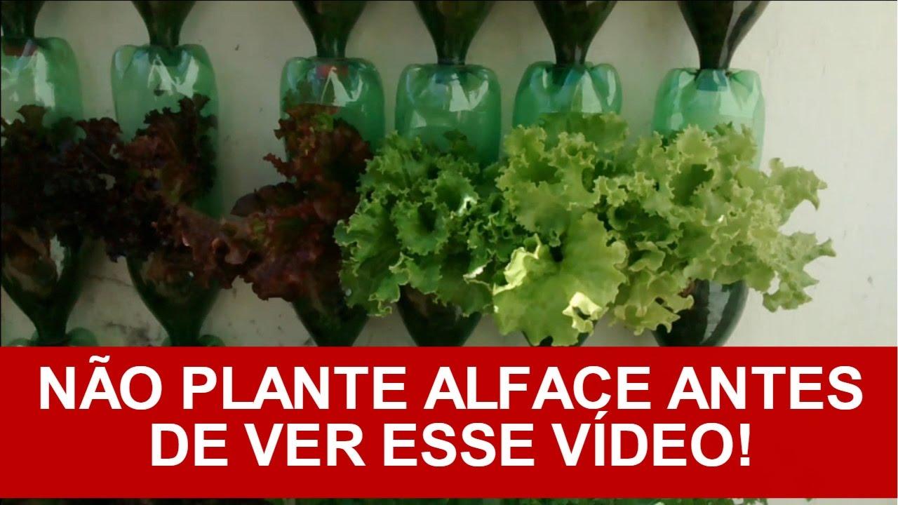 Extremamente Como Plantar Alface Em Garrafa Pet/vasos (processo completo  QT43