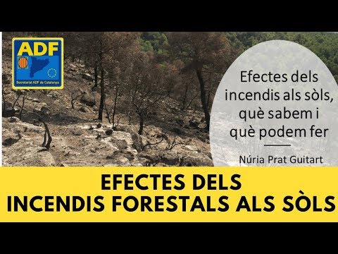 """Webinar """"Efectes dels incendis forestals als sòls"""""""