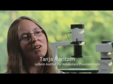 Dr. Tanja Maritzen, Leibniz-Institut für molekulare Pharmakologie, Berlin