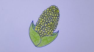 Cómo dibujar una mazorca de maíz