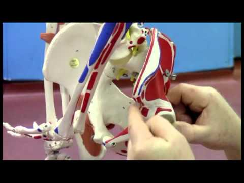 Sports Therapy. Pelvic Alignment Travel Video