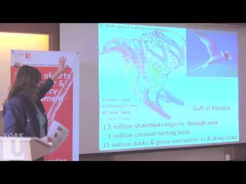Oil Spill Risks to Canadian Wildlife | Prof Gail Fraser | LA&PS | York U