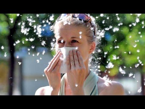 Причины аллергии – Как лечить аллергию