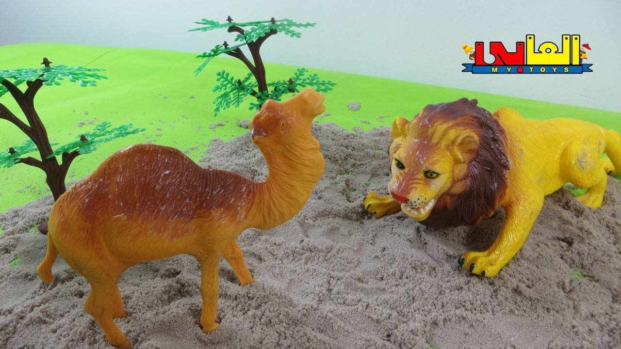لعبة الاسد و تضحية الجمل الطيب ألعاب حيوانات الغابة للأولاد والبنات