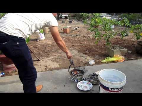 Dac san ran trun Vinh Long MVI_0403.MOV