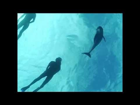 june-2009,-swimming-with-wild-dolphins...
