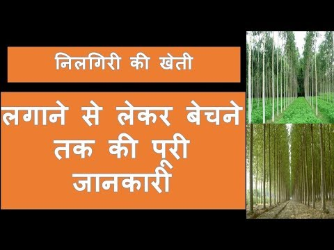 निलगिरी की खेती  successful farming  business model in india