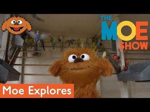 The Moe Show: Moe Explores - Pet Store
