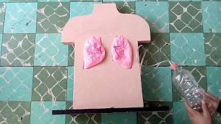 Maqueta de pulmones con Movimiento 2