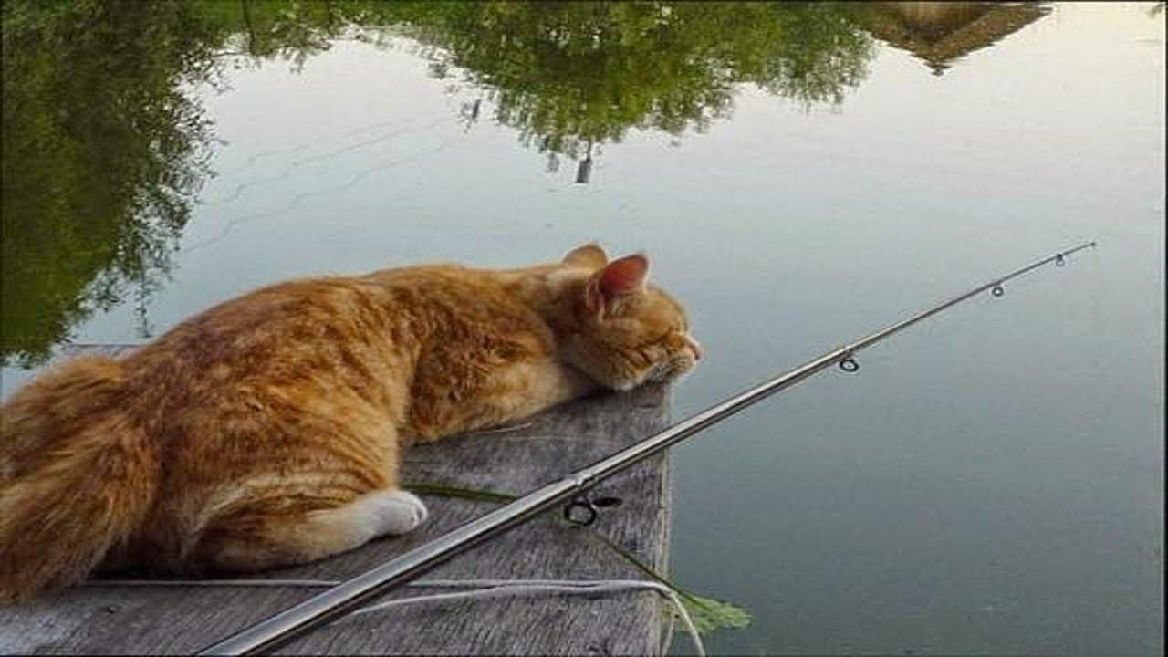Какие кошки лучше ловят мышей дворовые или породистые