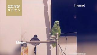 بالفيديو.. ببغاء يقلد أصوات الحيوانات بطريقة مدهشة