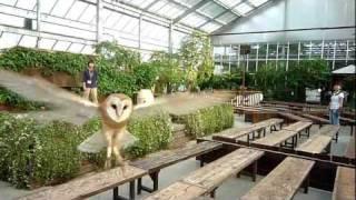 """神戸花鳥園のメンフクロウ""""キャスパー""""の 飛行訓練の様子。 http://kobe..."""