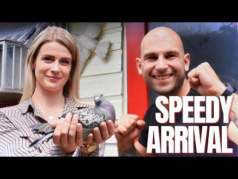 Fast Arrival Racing Pigeons