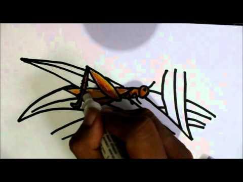Cara Menggambar Belalang Untuk Anak Anak How To Draw A Grasshooper
