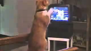 кот смотрит бокс