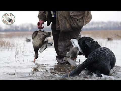 Mack's Prairie Wings - America's Premier Waterfowl Hunting Outfitter