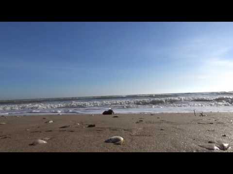 Звуки моря - песчанный пляж в феврале