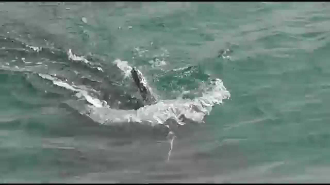 Whale watching san simeon pier august 17 2015 youtube for California 1 day fishing license