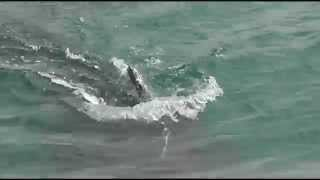 Whale Watching - San Simeon Pier - August 17, 2015