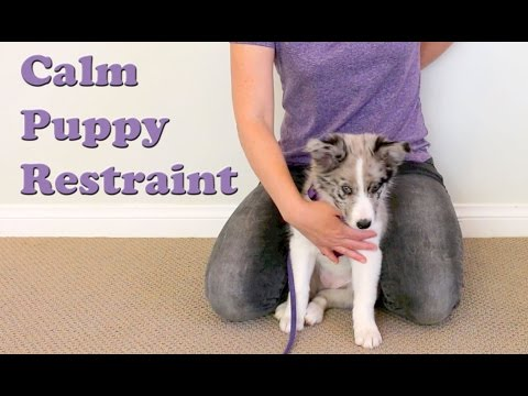 Train your puppy THIS!!! - Restraint - Dog Training