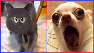 Funny Animal Videos That Make Me Burst Into Tears Laughing 😂😂😂 (CUTE) | Try Not To Laugh