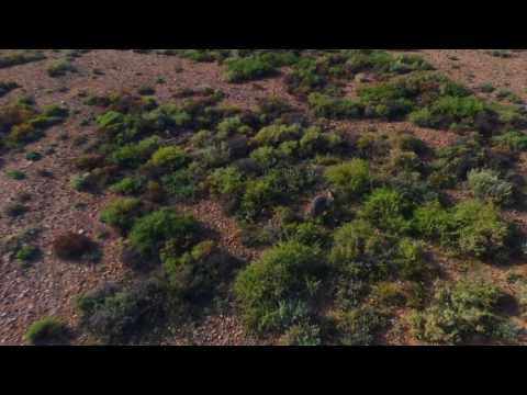 Drone Vision Woomera - Kangaroo & Joey