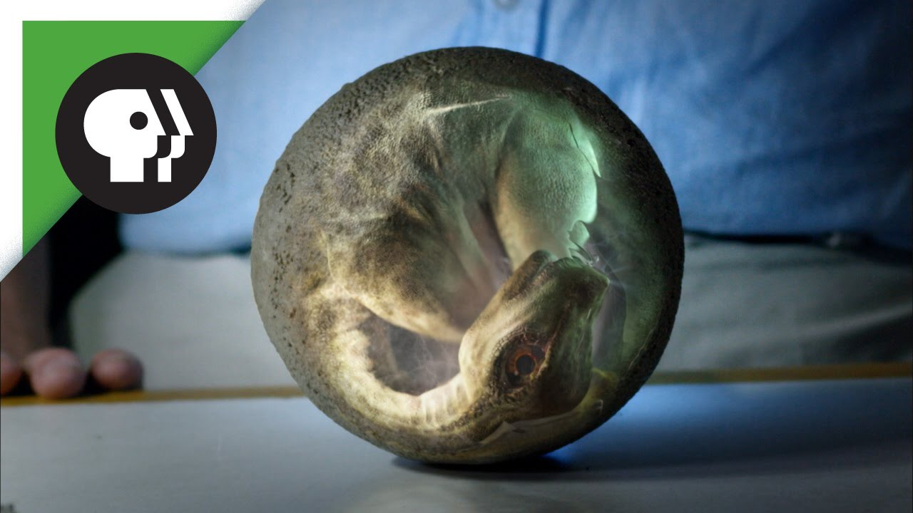 Dinosaur eggs real Hadrosaur Egg
