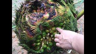 Anh mang về loài cây 'ngàn năm' mới ra hoa, 20 năm sau bất ngờ nó đẻ ra ổ trứng