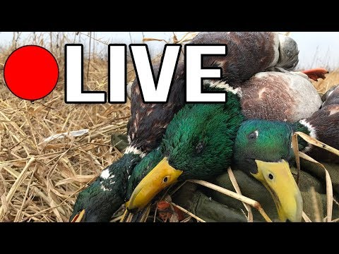 🔴 Live Duck Hunting Chat | A Guide's Perspective