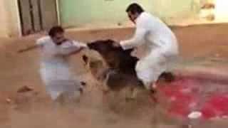 كلب شرس يهاجم ويعض شخص بقوه