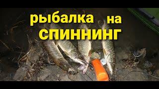 Рыбалка на щуку и окуня. Ловля спиннингом