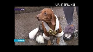 У Києві пройшов парад такс