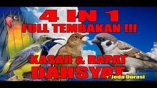 Download lagu Masteran Burung 4 in 1 TEMBAKAN KASAR DAN RAPAT mix burung kecil kecil cabe rawit MP3