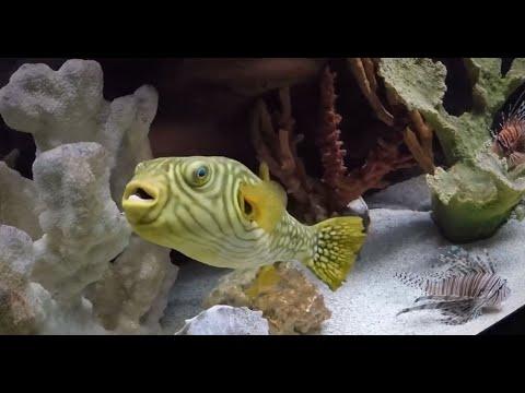 The Scranton Aquarium in Pennsylvania