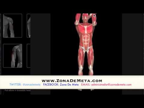 estiramientos Brazos, biceps, triceps y antebrazos