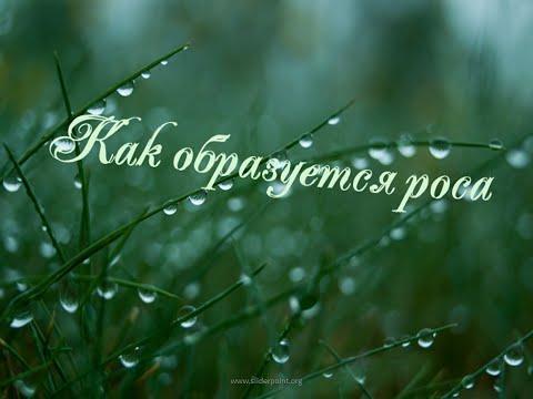 Дождь и интересное о дожде