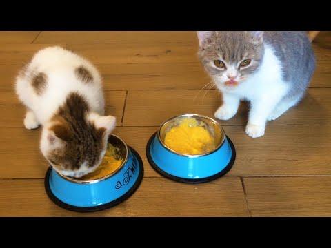Breakfast Of Cats Cute Kittens Eat Food Animals TV