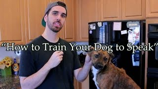 How To Train Your Dog To Speak