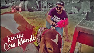 Karachi Cow Mandi 2019 | Super Highway | Kashan