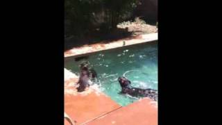 Dog swims to bottom of pool
