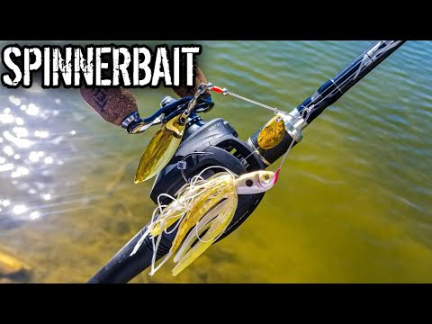 Bass Fishing With A Strike King Spinnerbait (AWESOME Lure For Fall Fishing)