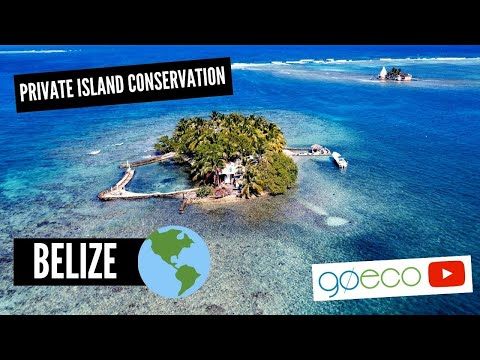 Volunteering on a Private Island in Belize | Marine Conservation