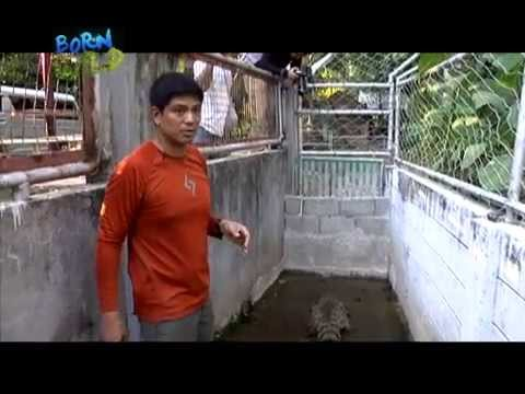 Doc Nielsen rescues a Philippine crocodile; gets bitten by its turtle companions | Born to be Wild