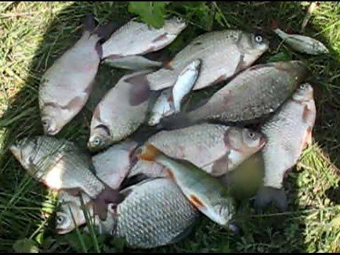 Ловля карася летом. Простая рыбалка на карася.20.08.2016. Simple fishing.