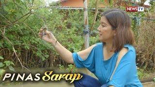 Pinas Sarap: Kara David, nanghuli ng mga ulang sa Pampanga