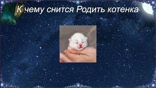 К чему снится Родить котенка (Сонник)