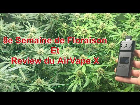 NL#15: 8e Semaine de Flo et Review AirVape X