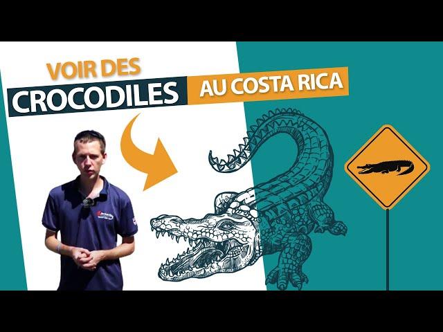 Voir des crocodiles pendant votre voyage au Costa Rica
