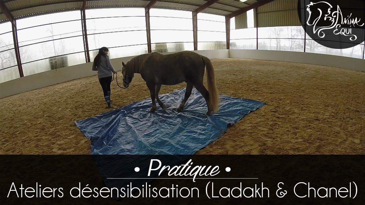 df8fa2a50076b PRATIQUE • Ladakh   Chanel   Désensibilisation 1 - YouTube