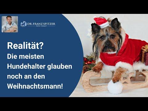 Die Meisten Hundehalter Glauben Noch An Den Weihnachtsmann!